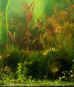 Indoor Water Garden - Plants