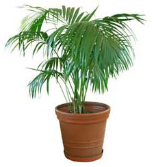 tropical house plants - your easy growing friends