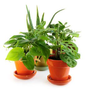 Indoor Gardening Guide - Pot Plants